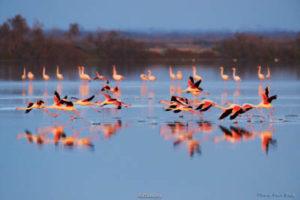 pik flamingo trip